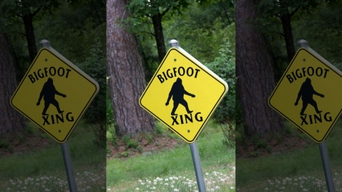 Is it…Bigfoot?